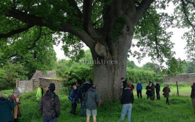 Ancient tree forum summer event a success