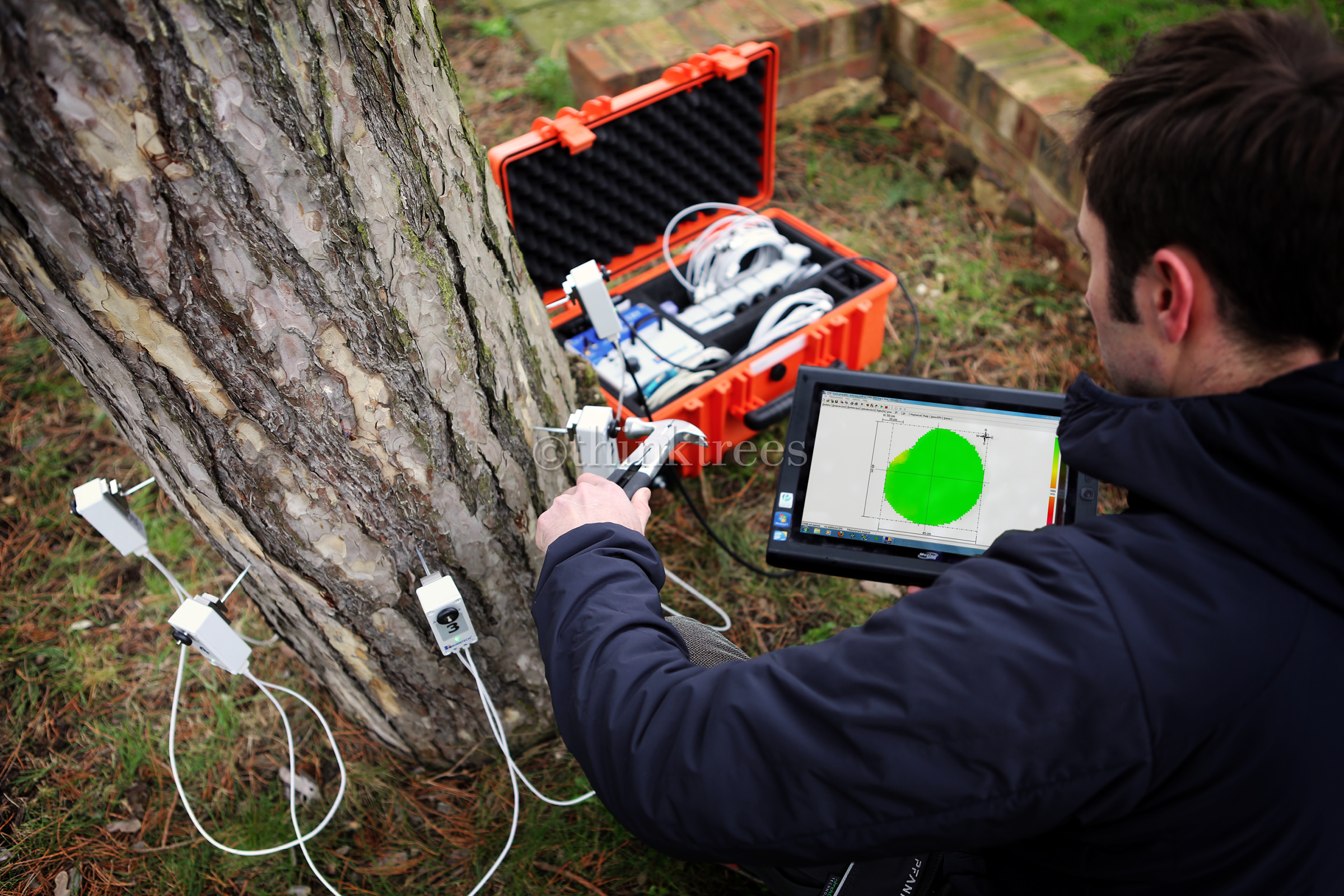 Tree expert testing a pine tree for decay using an arbotom impulse tomography unit