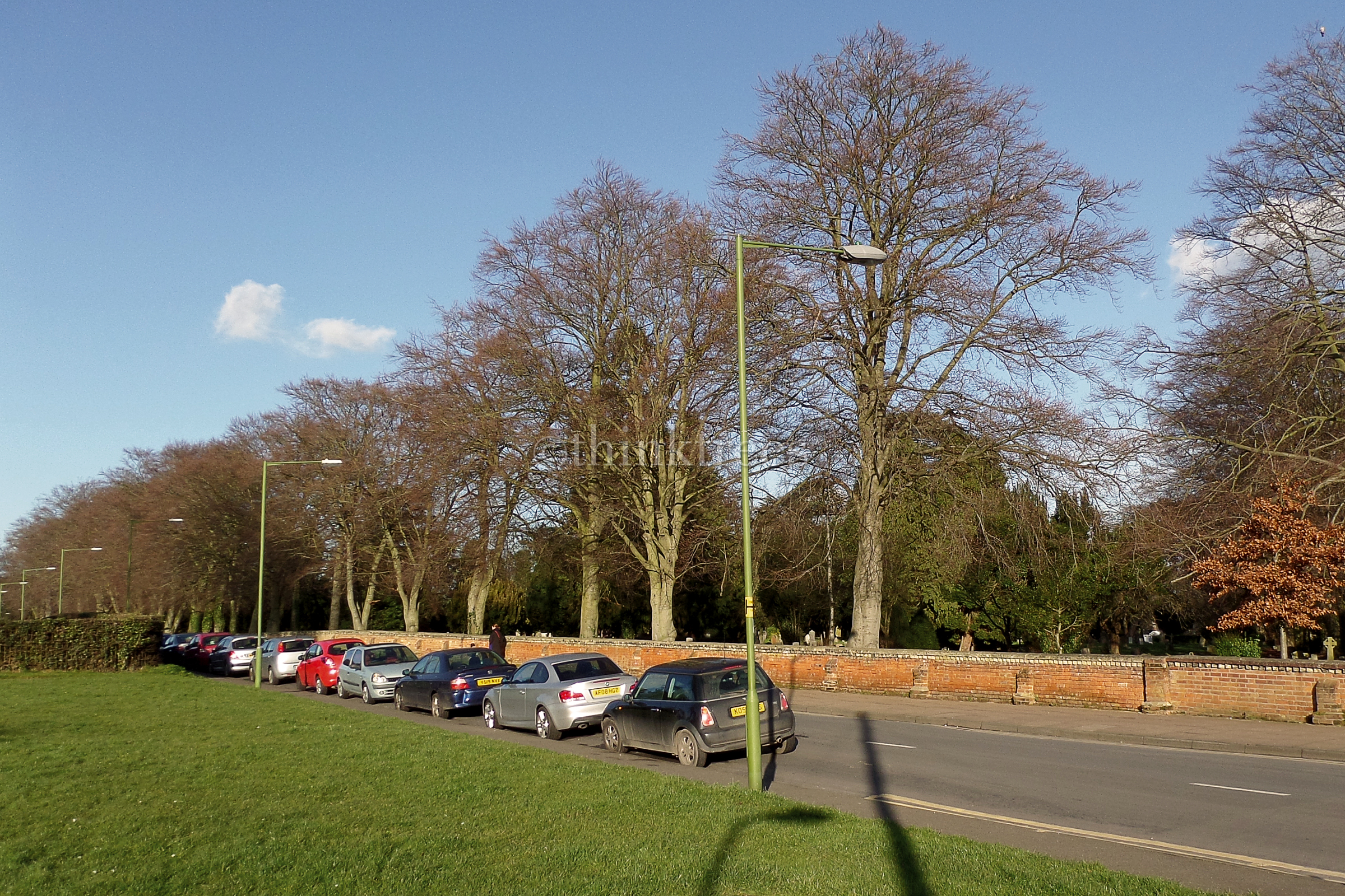 An impressive line of mature beech trees running the length of Cemetery Road in Bishop's Stortford