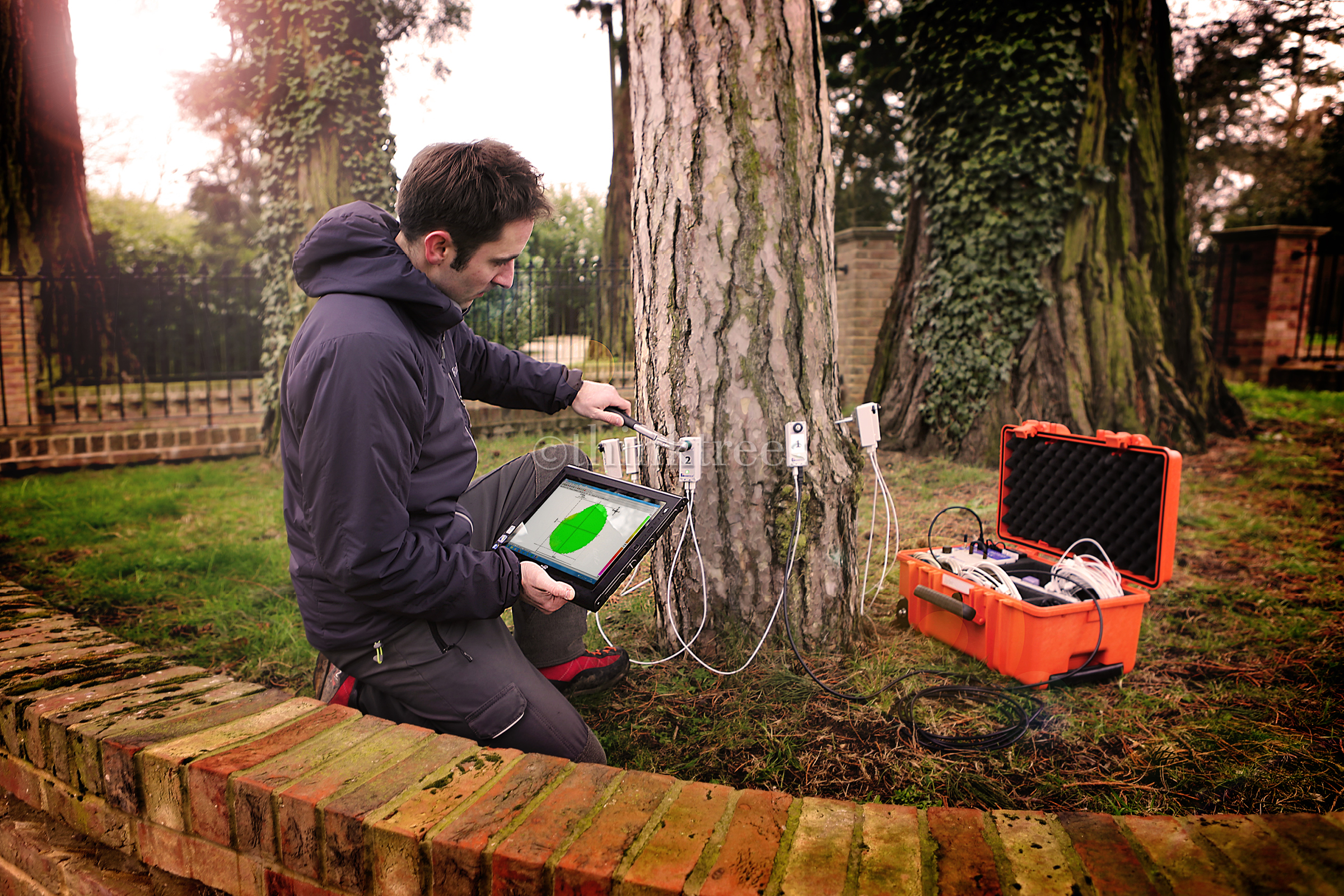 Tree expert testing for decay using an Arbotom impulse tomography unit