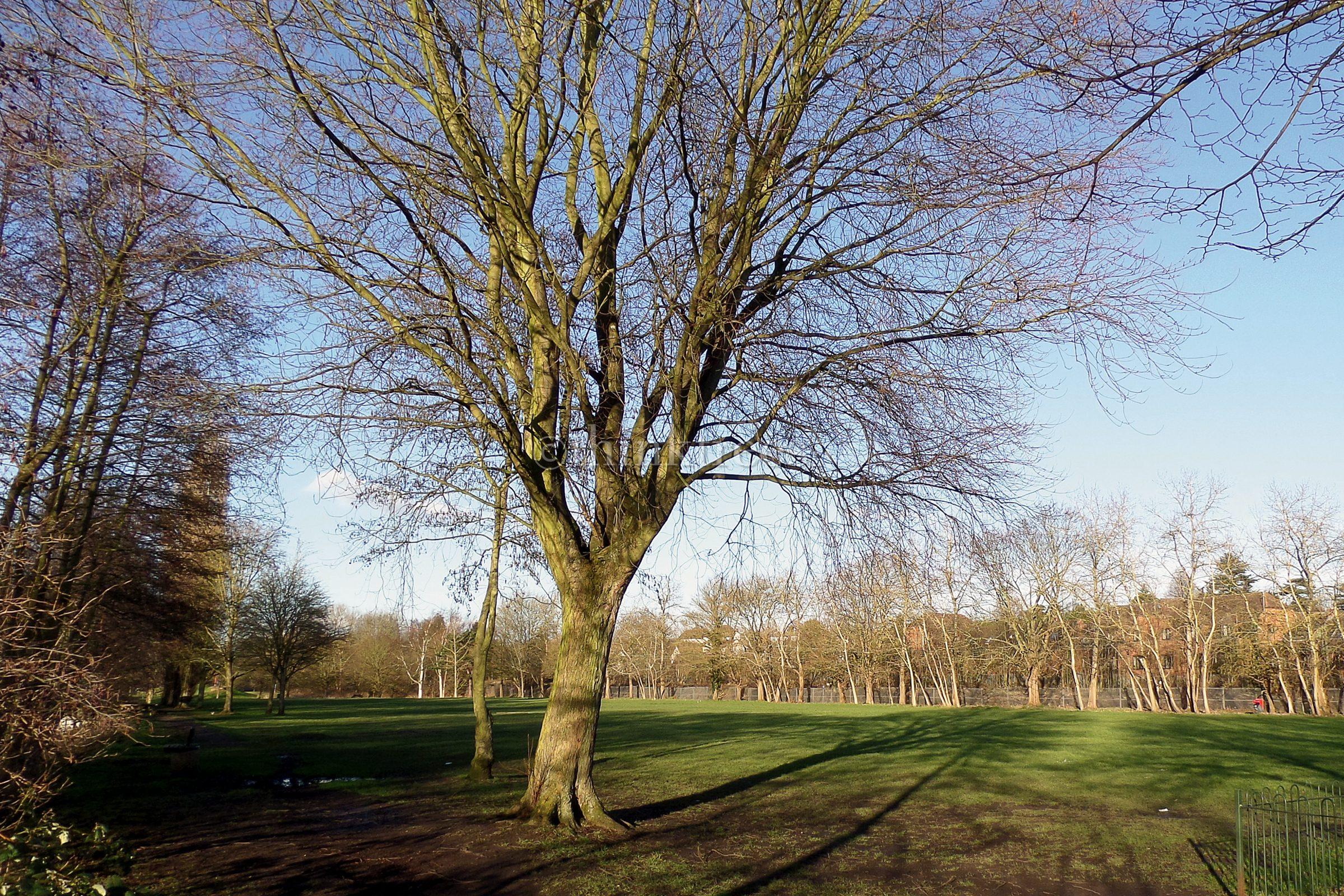 View across Sworders Field in Bishop's Stortford, Hertfordshire